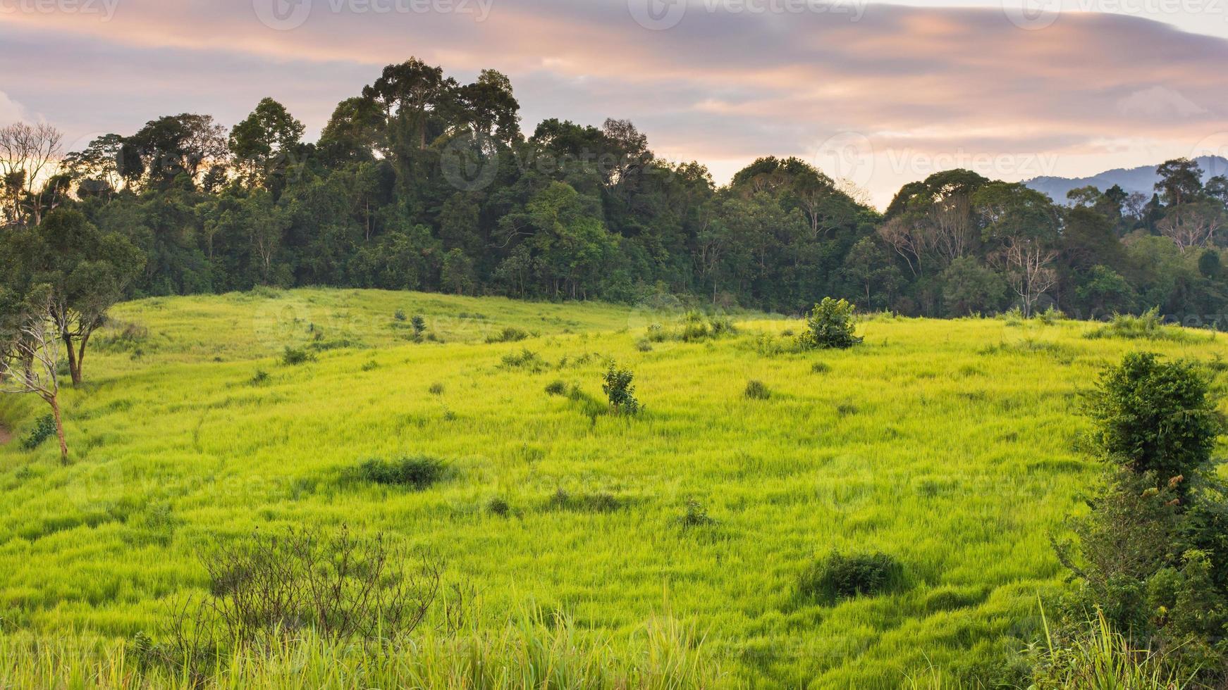 prado verde, parque nacional khao yai tailandia foto