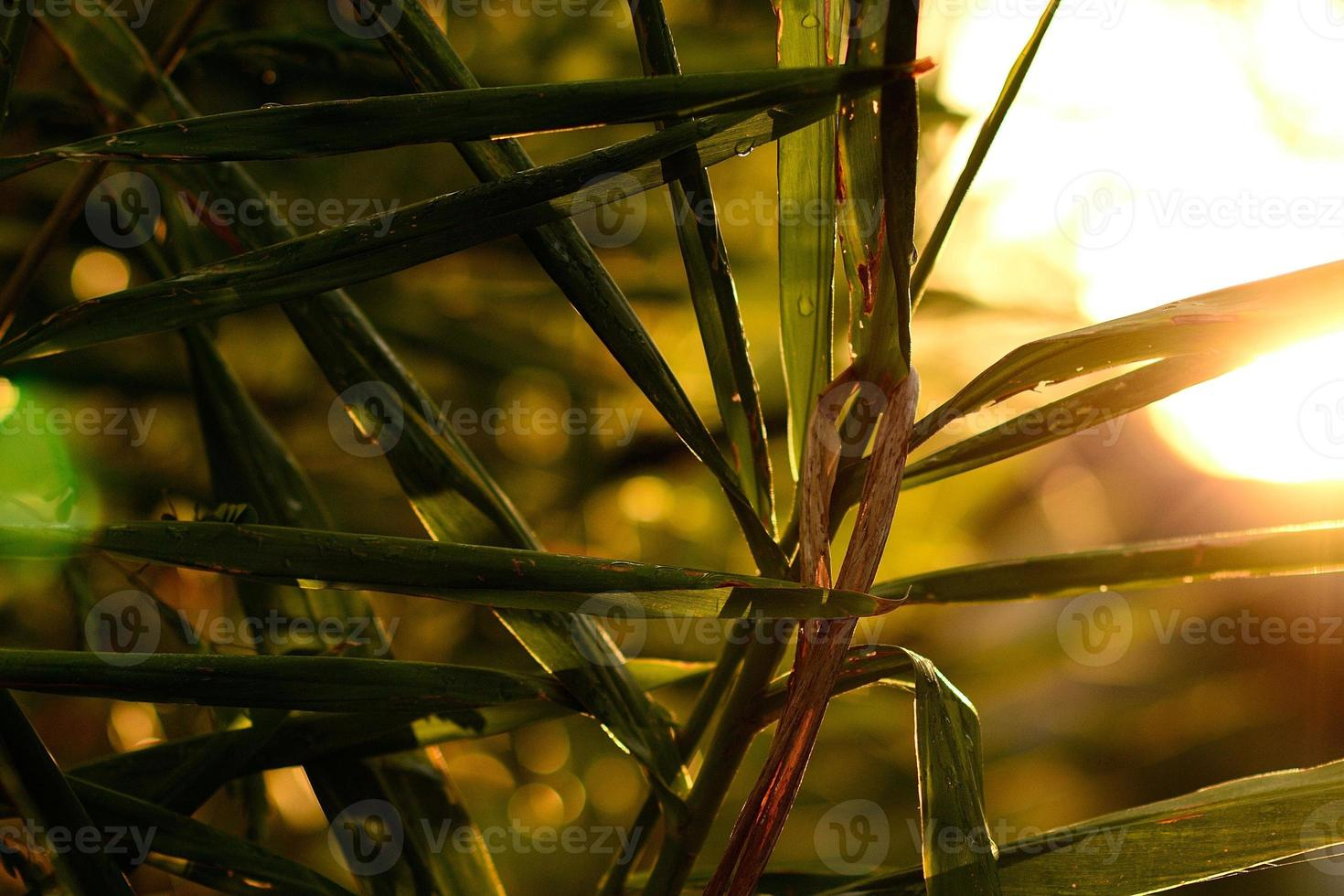The Plant photo