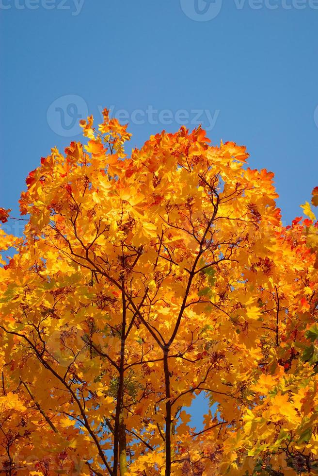 Yellow and red leaves on trees in autumn park photo