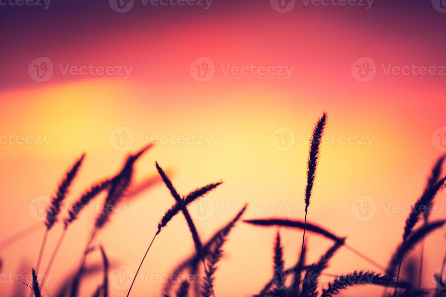 Sunset Field, Beautiful Vibrant Color photo