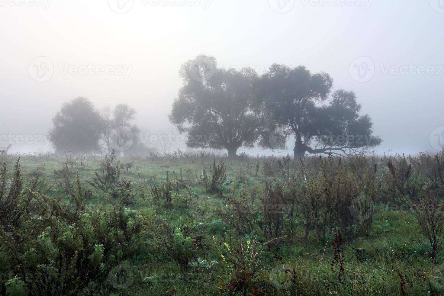 misty autumn morning photo