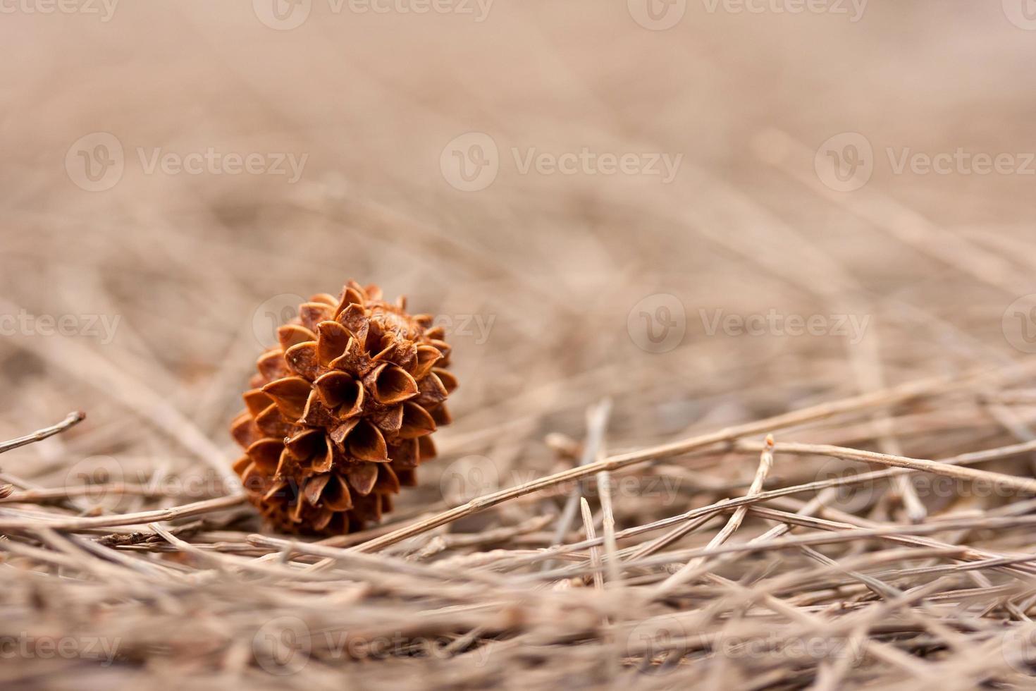 Fallen cone photo