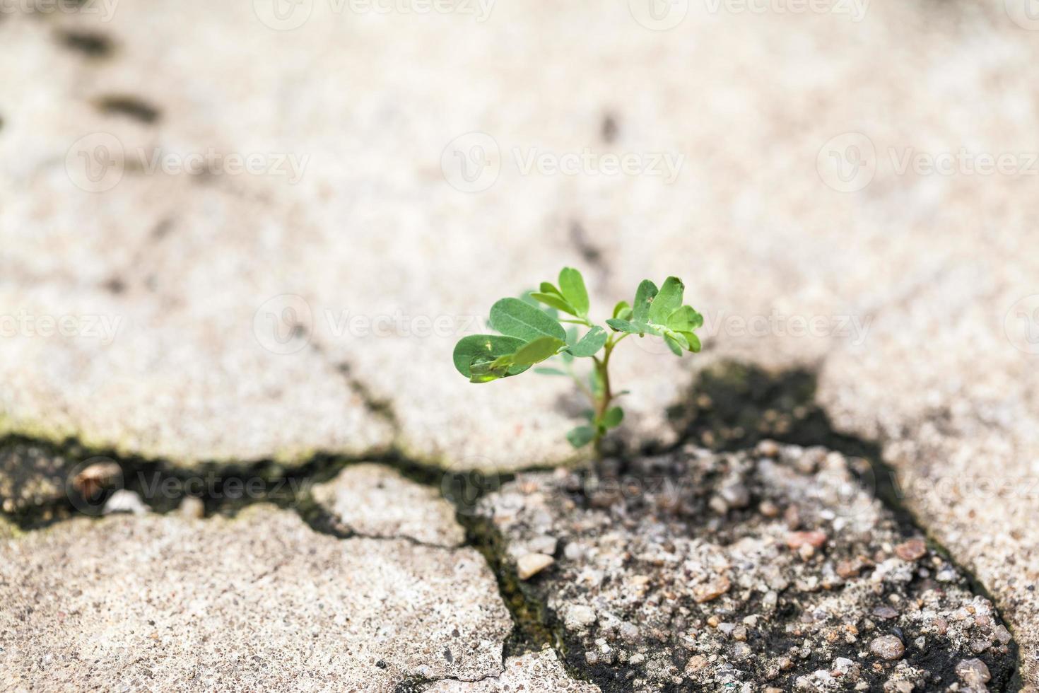 planta joven en hormigón rift. foto
