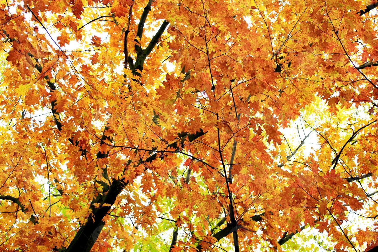 parque de otoño con árboles amarillos foto