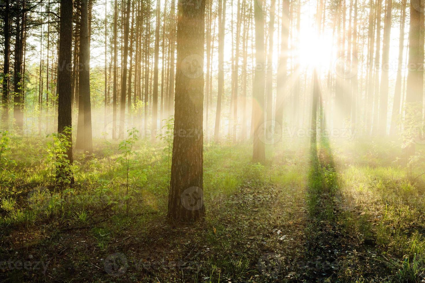 zonsondergang in het bos foto