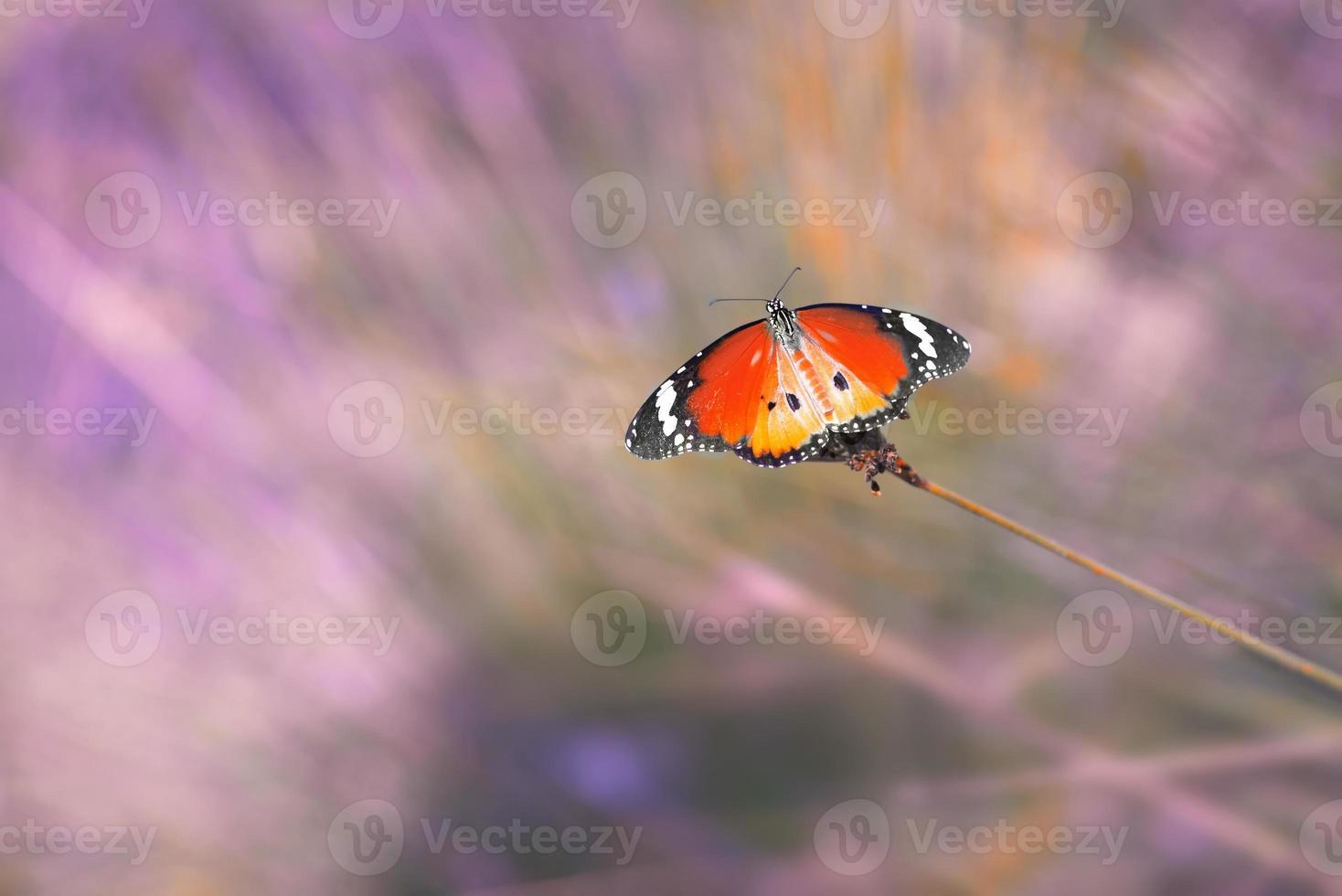 mariposa vintage y flor en primavera foto