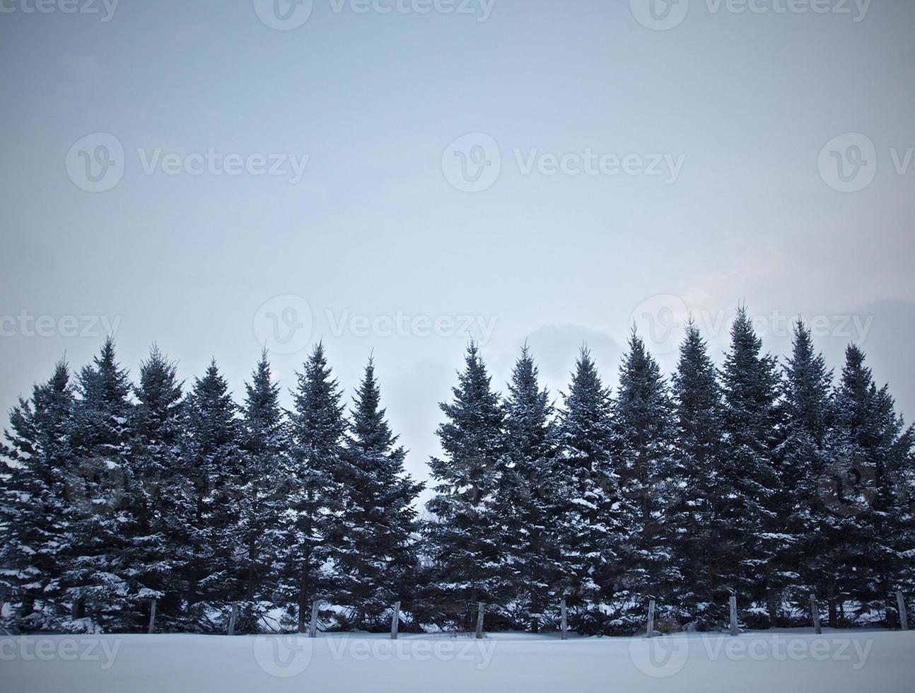winterbomen in de sneeuw. foto