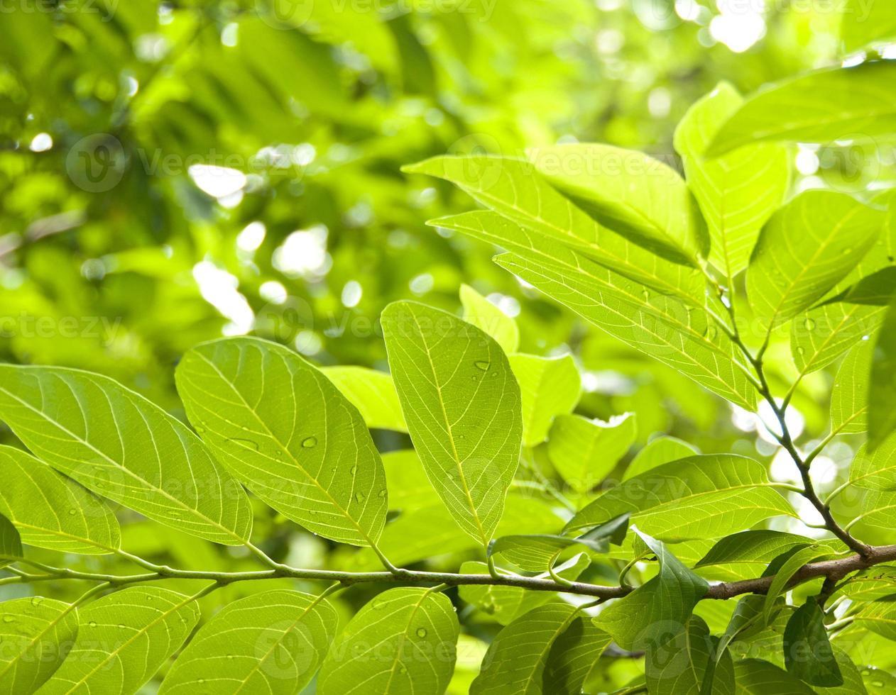 hojas frescas foto
