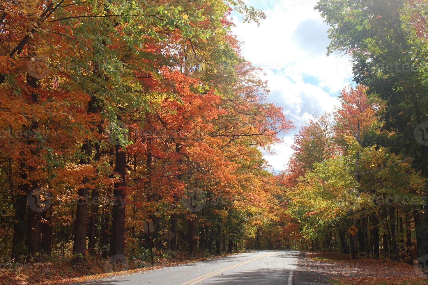 autunno nel bosco foto