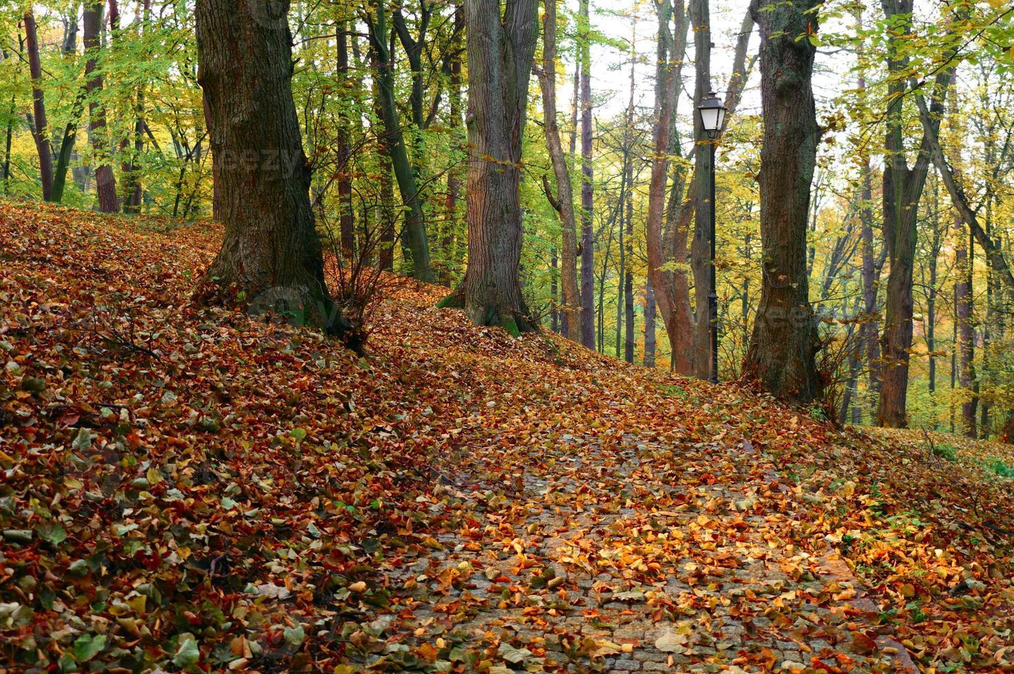 herfst in een park foto