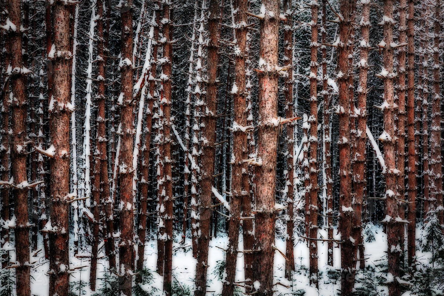 bomen uitlijning op koude winterdag foto