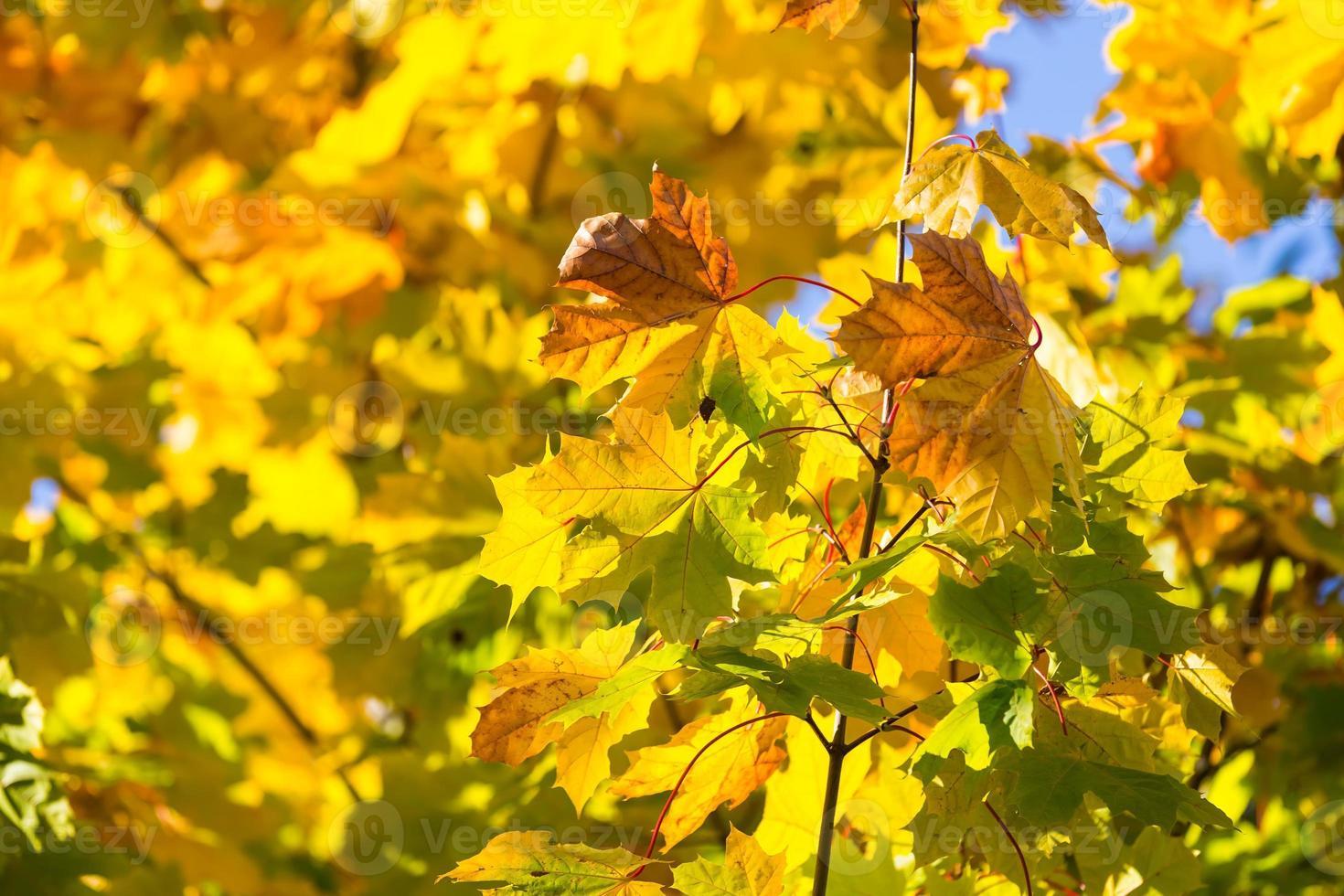 folhas de outono no galho contra o céu foto