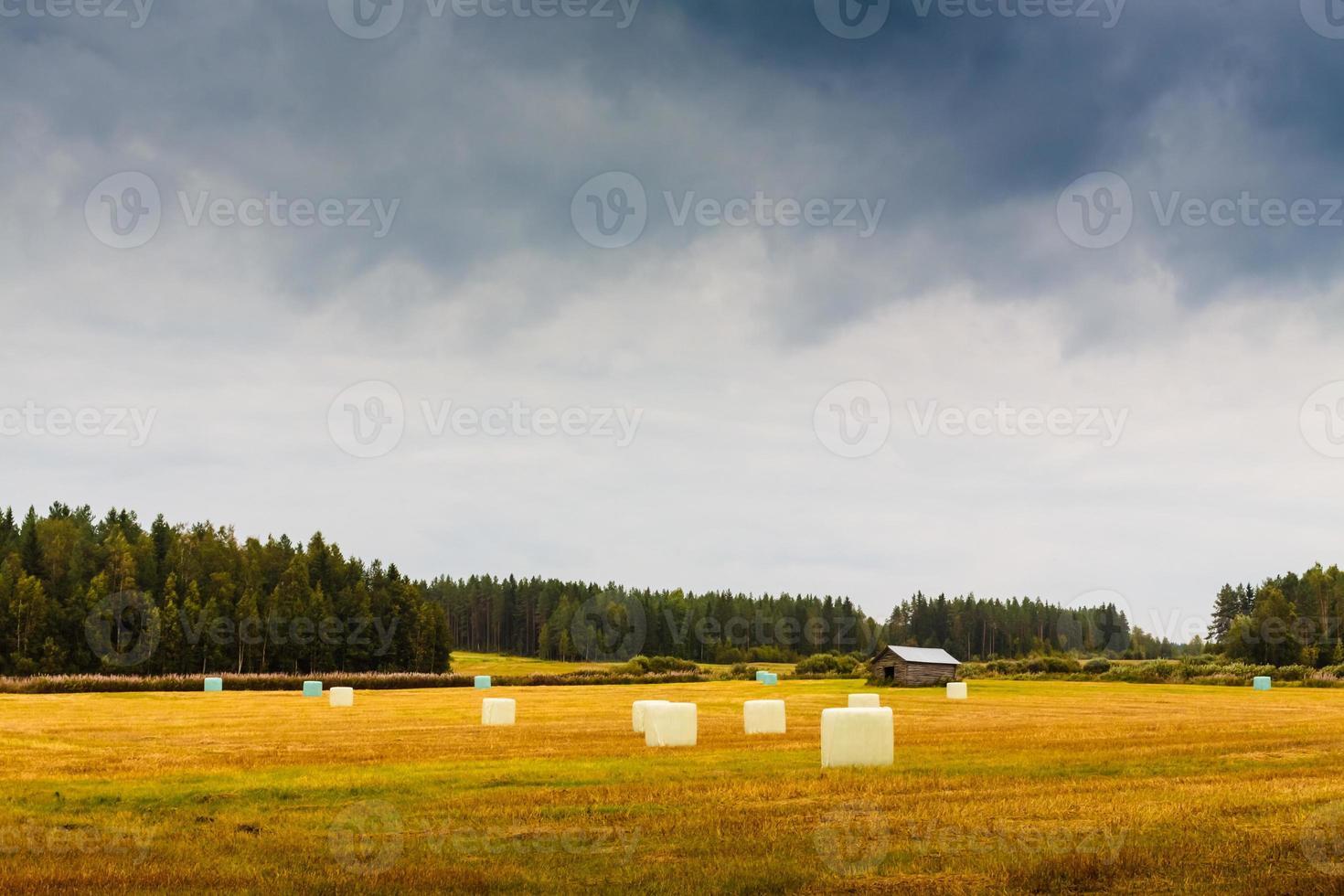 rollos de heno en el campo de otoño foto