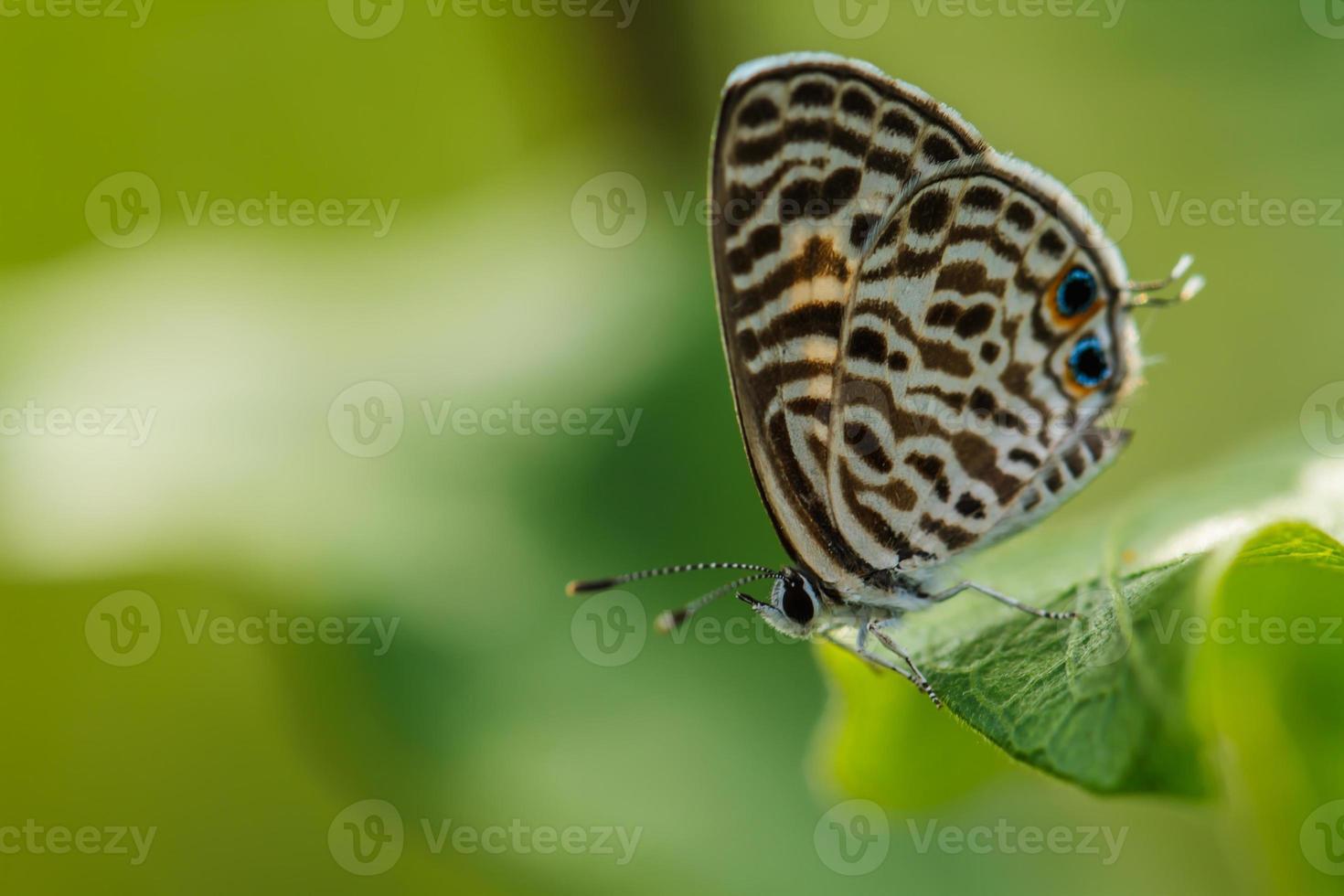 borboleta na folha verde foto