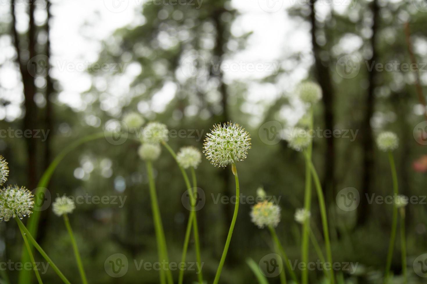 schöne Blumen im Dschungel. foto