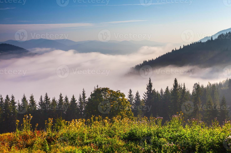 hermoso paisaje de verano en las montañas foto