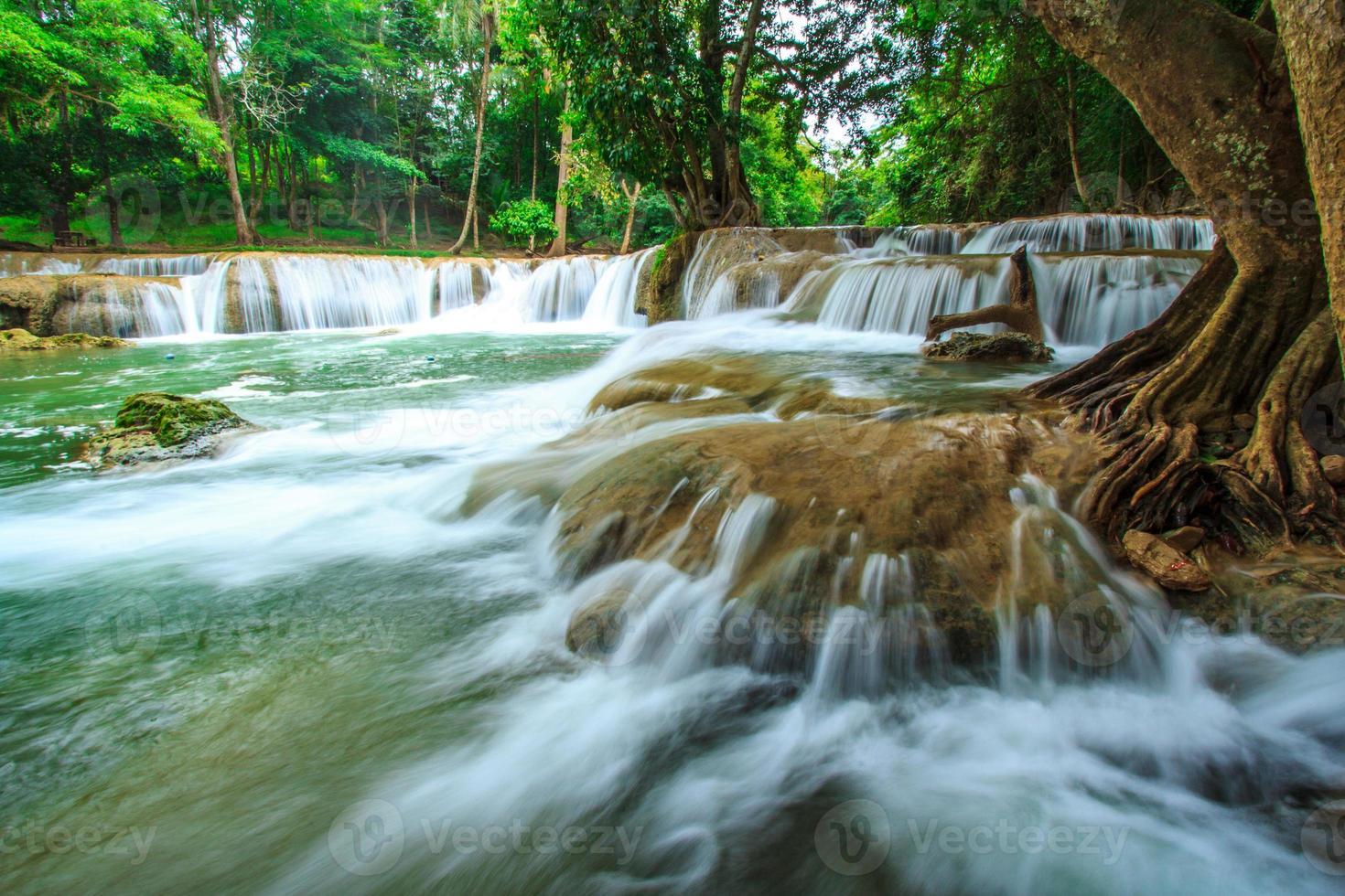 waterfall tree in thailand photo