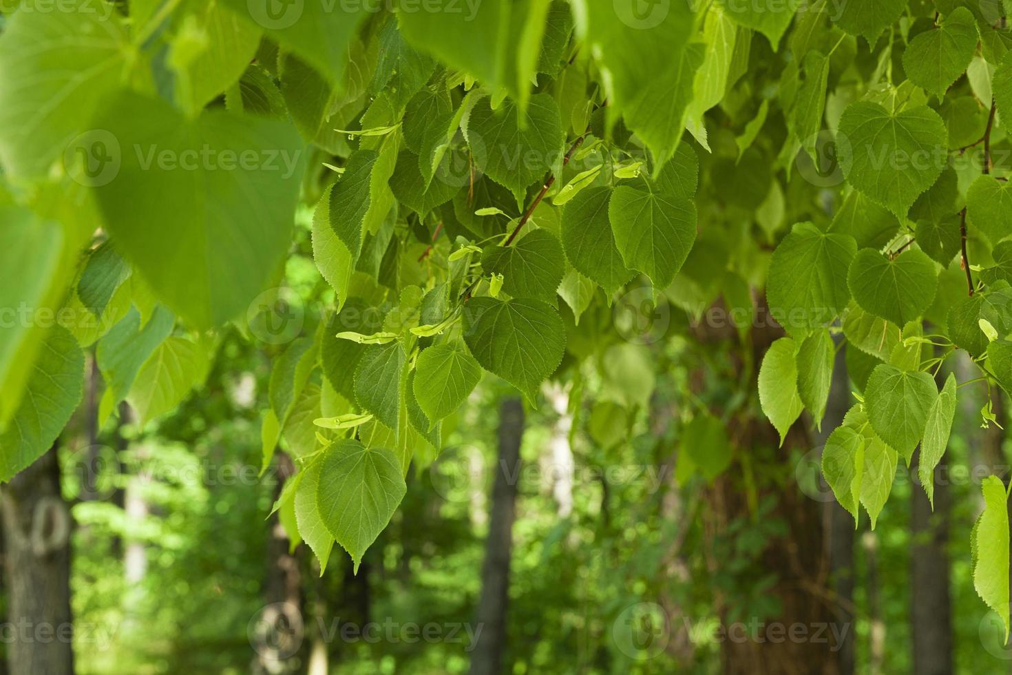 folhagem verde foto