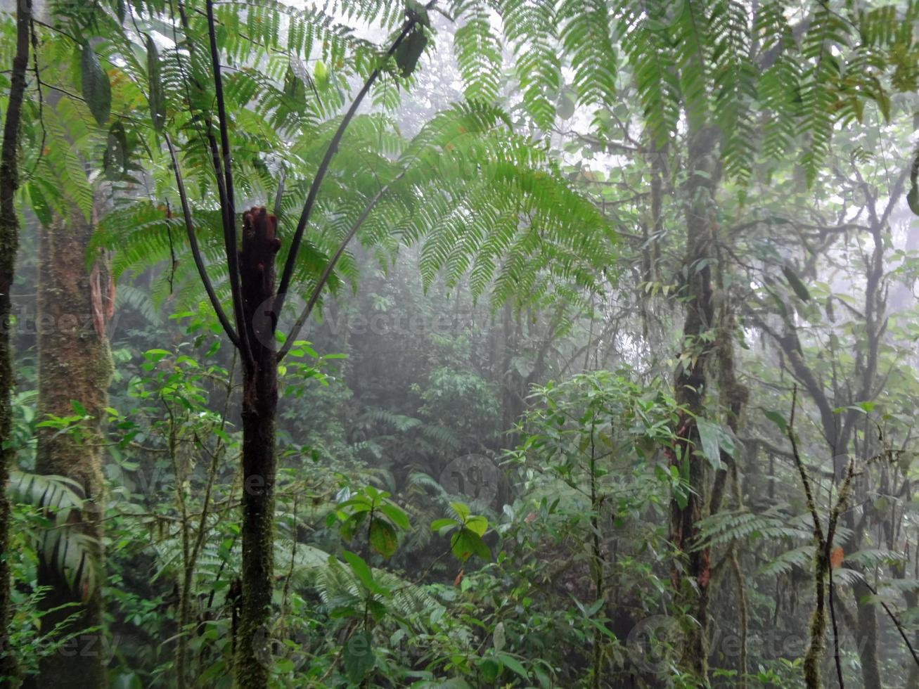 selva tropical de costa rica foto
