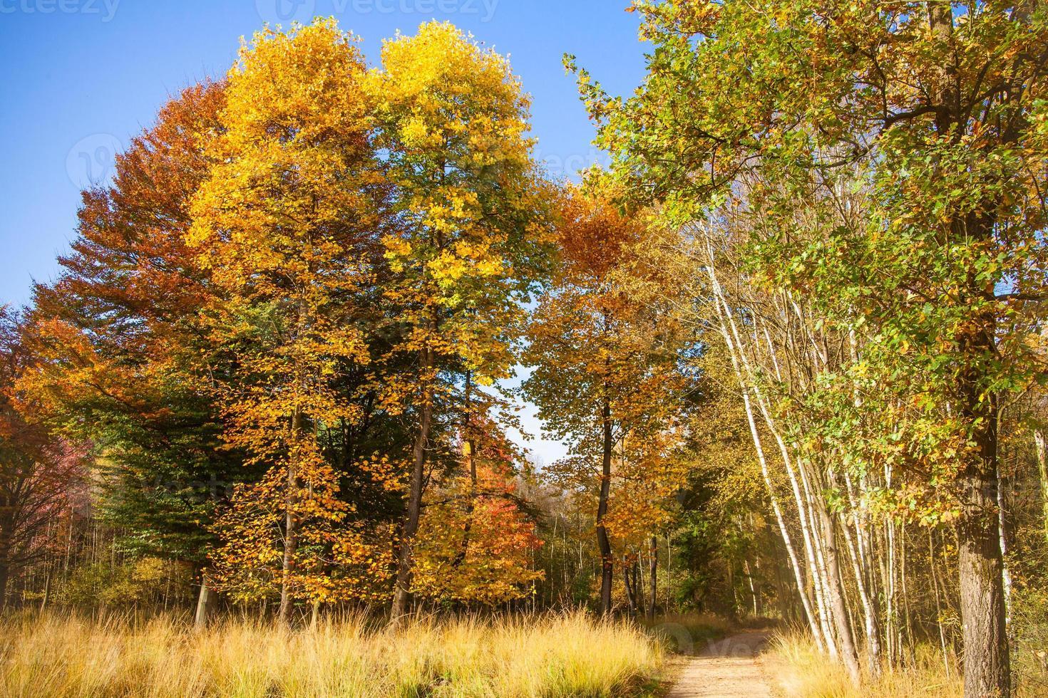 mooie herfst foto