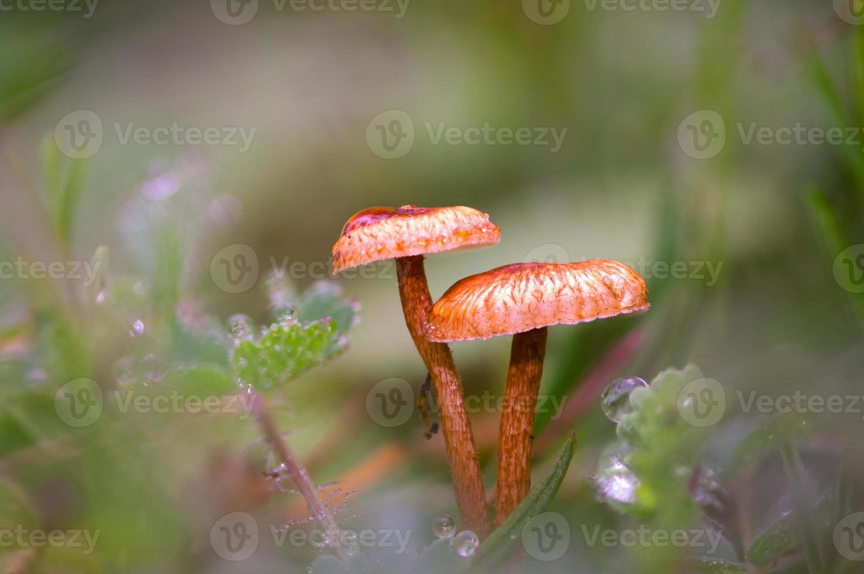 small mushrooms photo