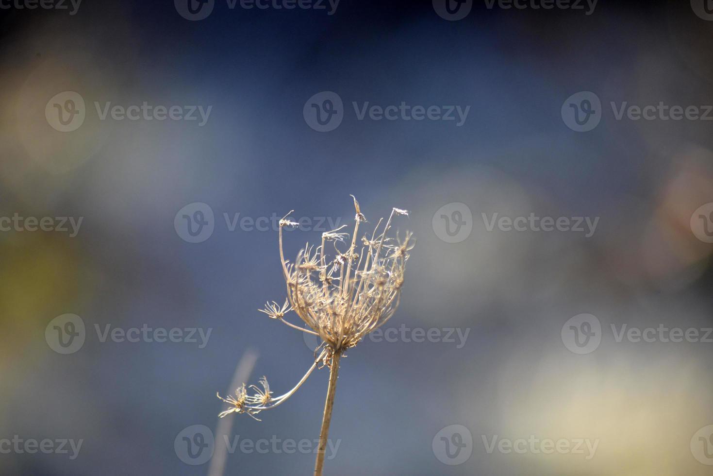 droge plant na zonsopgang foto
