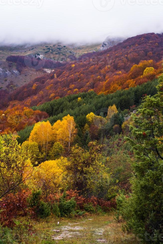 herfst gekleurde berg foto