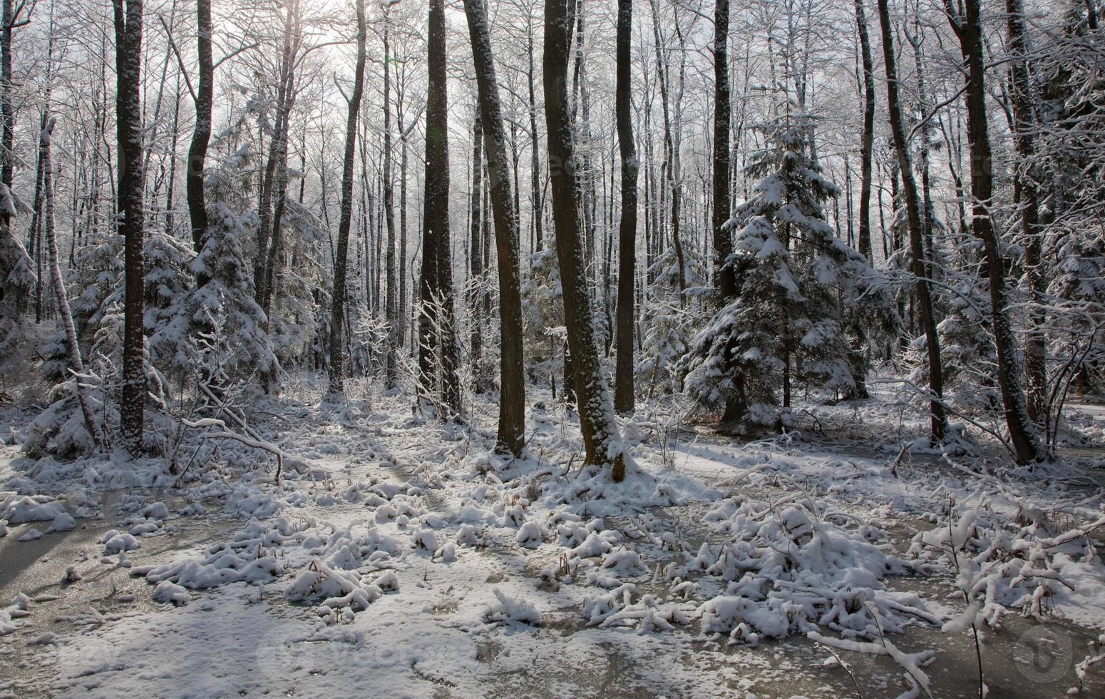 queda de neve após parada do pântano pela manhã foto