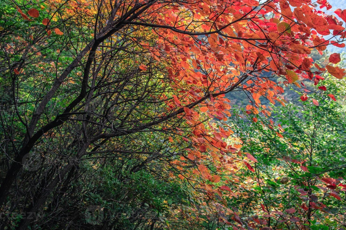 montagnes et feuilles photo