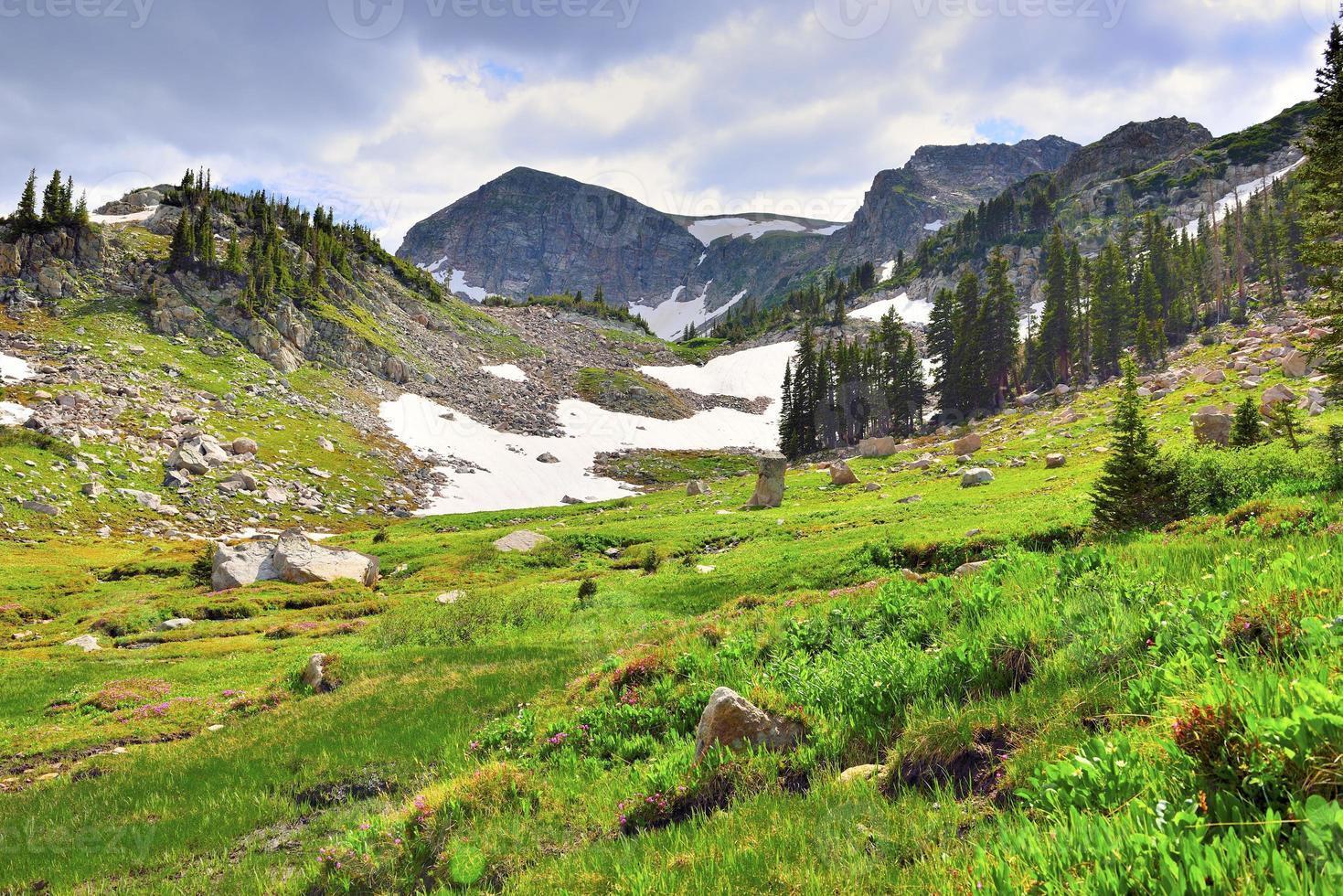 tundra alpina de alta altitude no Colorado durante o verão foto