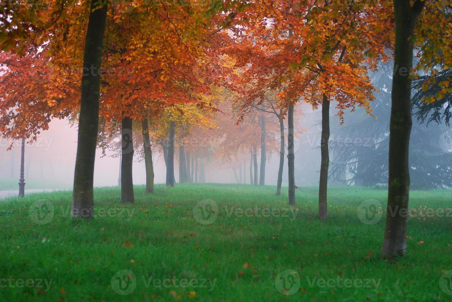 brume d'automne photo