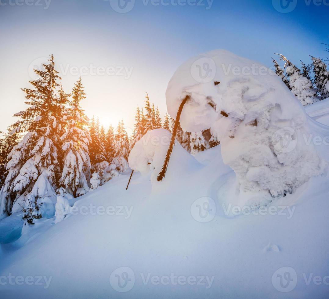 met sneeuw bedekte kleine sparren in het bergbos bij zonsopgang foto
