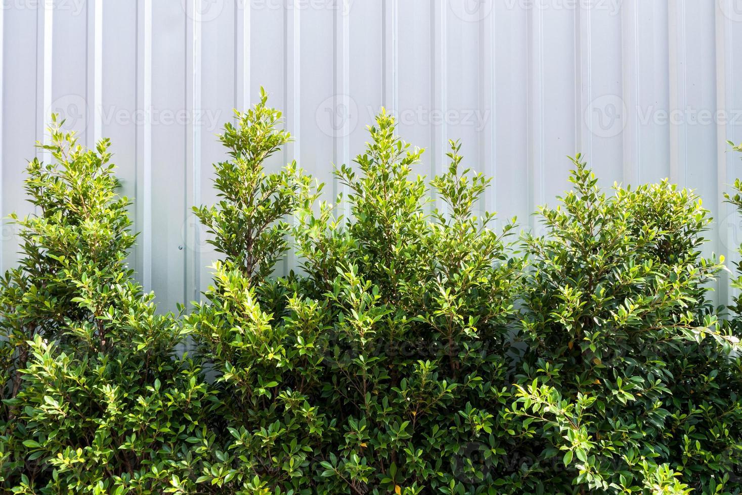 árvore em fundo branco foto