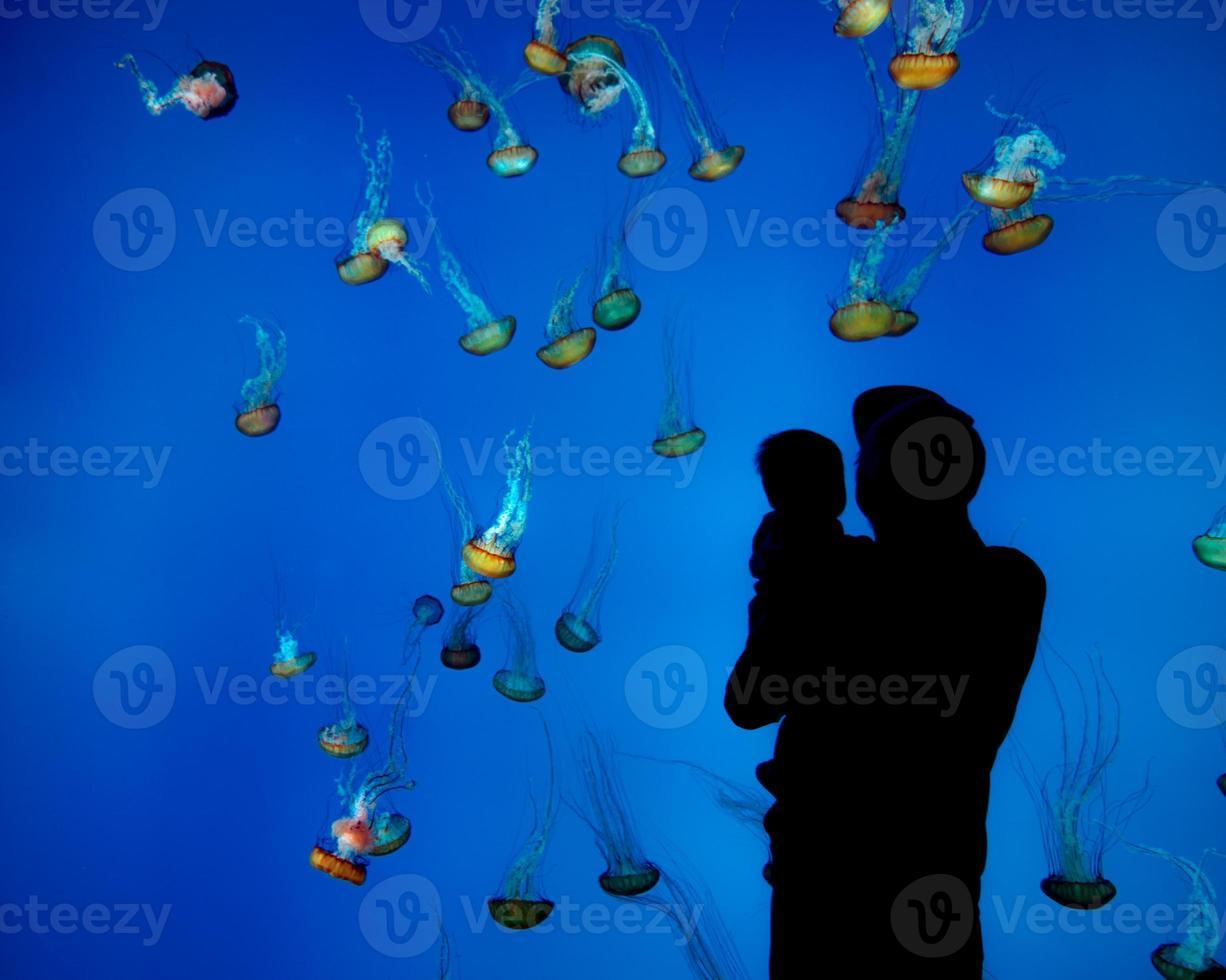 homem com bebê vendo água-viva foto