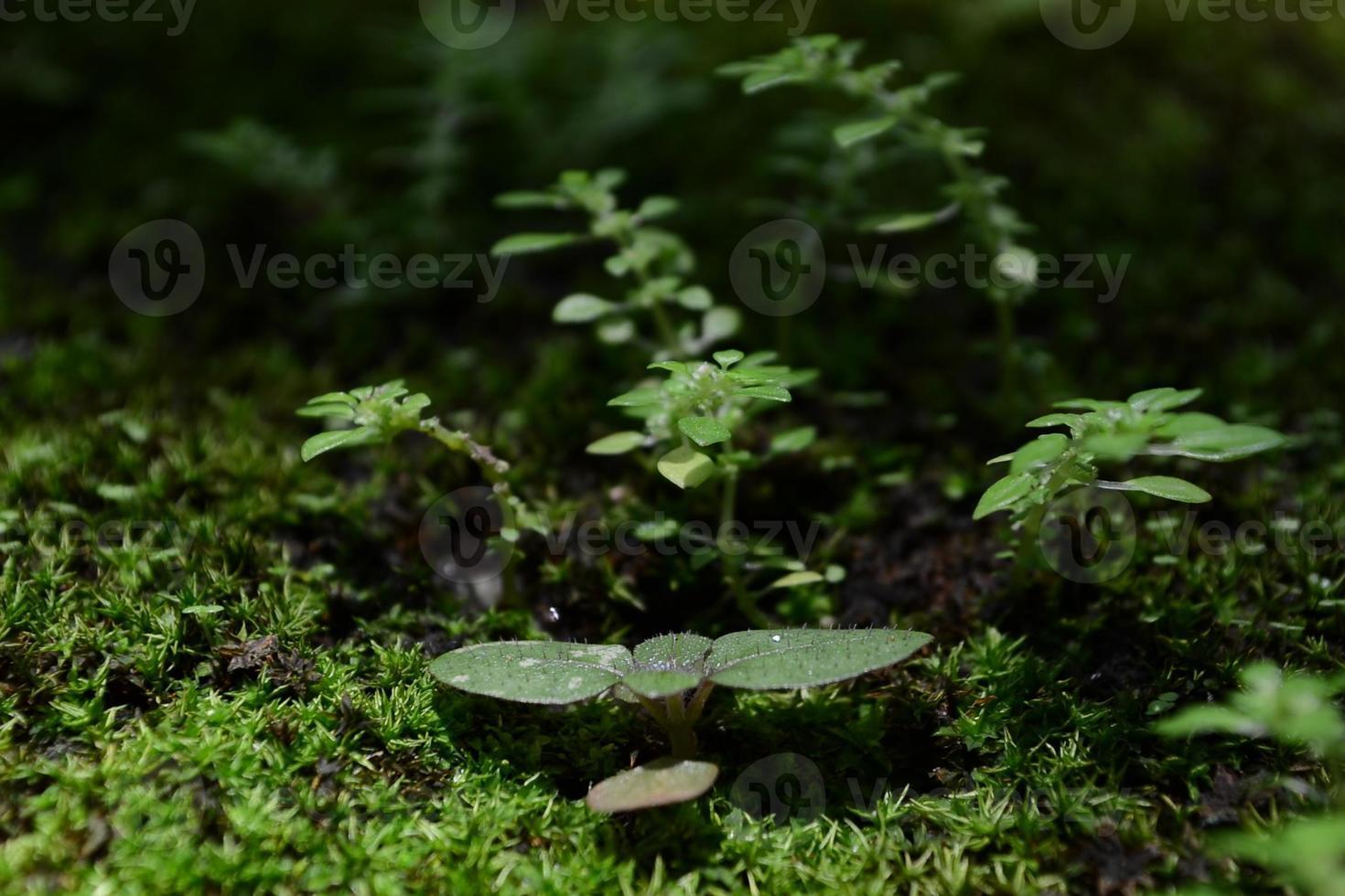 de plant foto