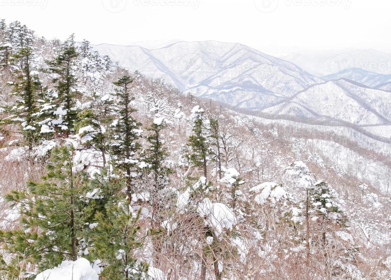 Fantastic winter landscape snow hill in korea photo