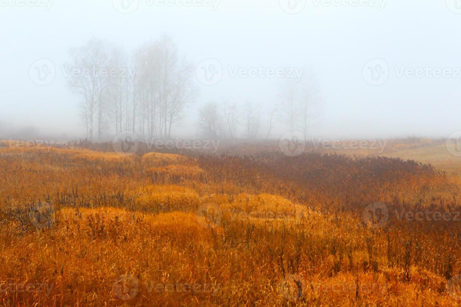 herfst wood.fog achtergrond. foto