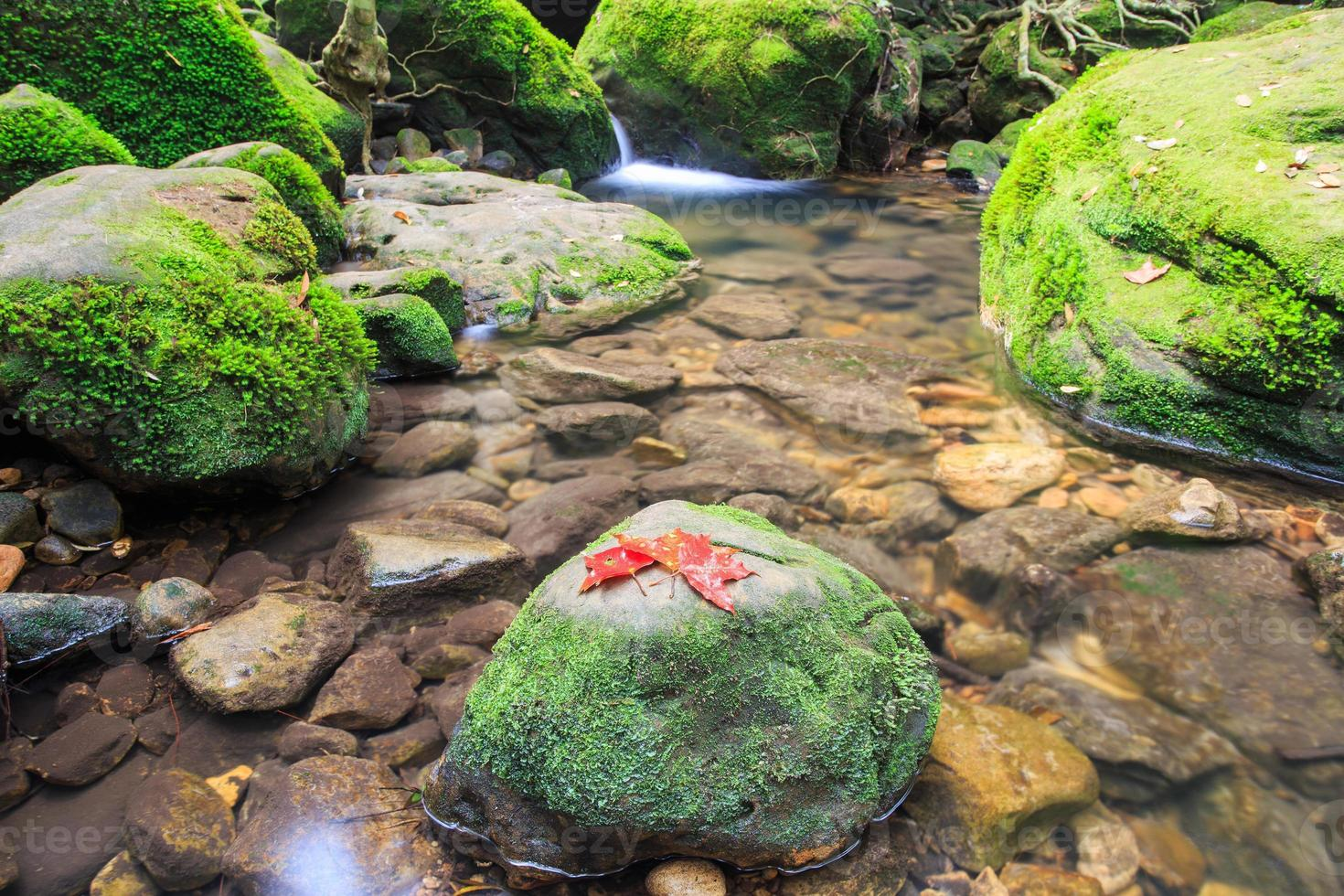 parque nacional phu kradung foto