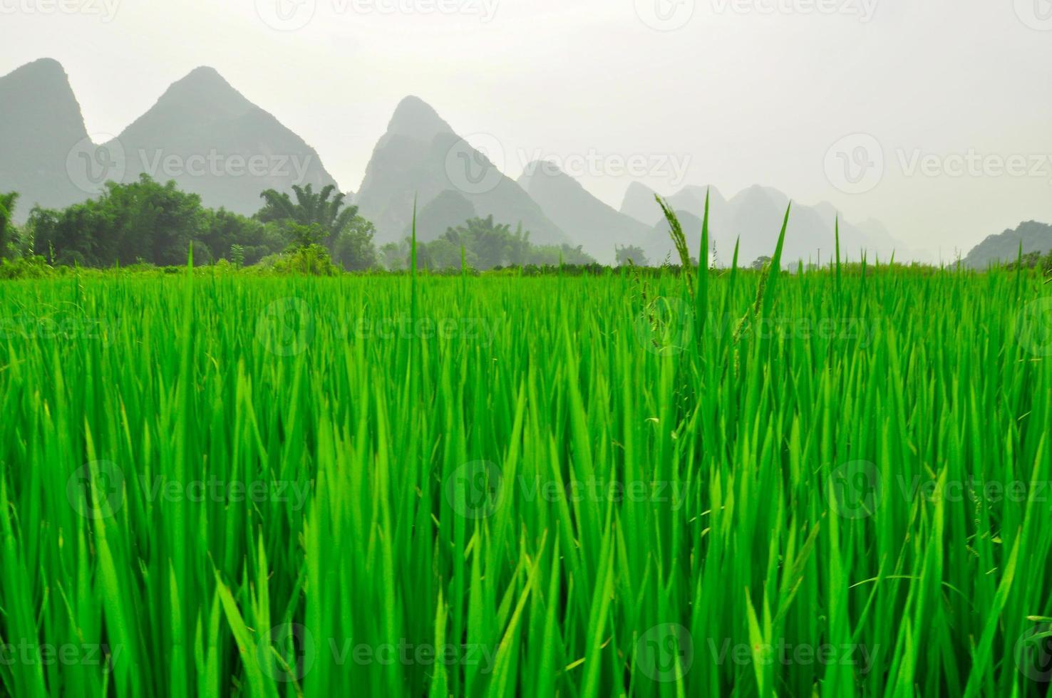 paisaje de montaña kárstica del río guilin li en yangshuo foto