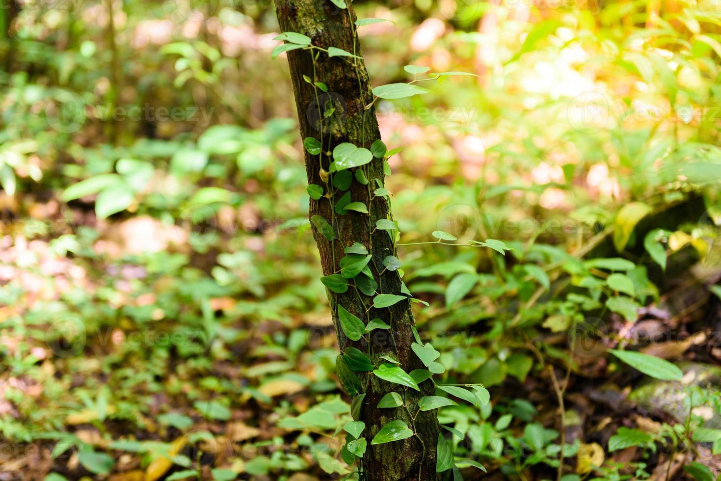 mos vert sur l'arbre photo