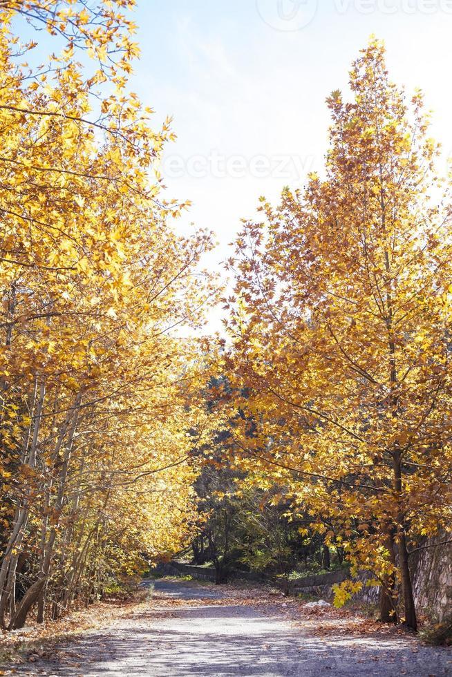 Autumn trees photo