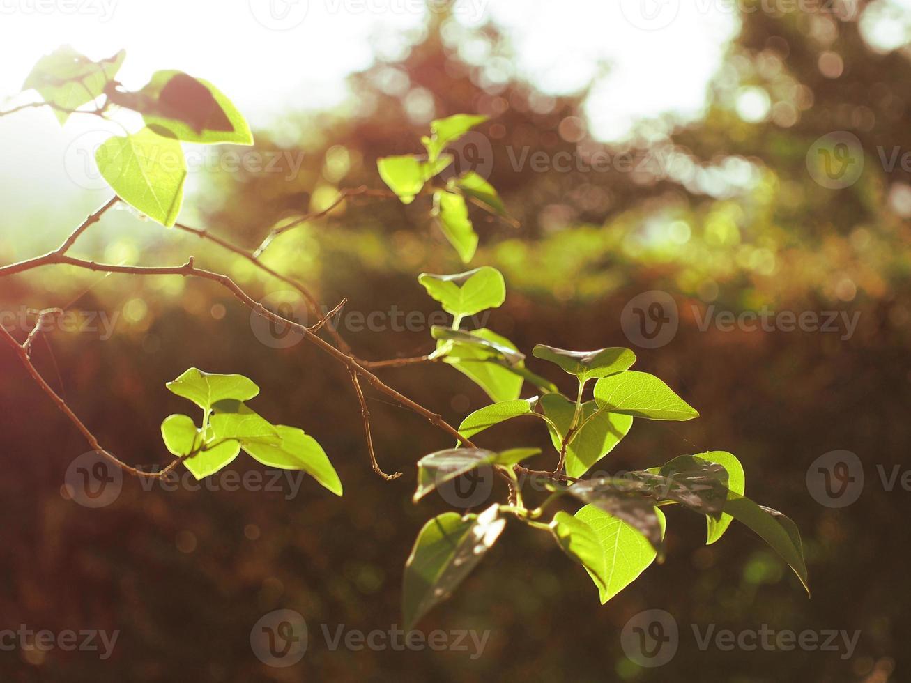 rama de un árbol en el sol foto
