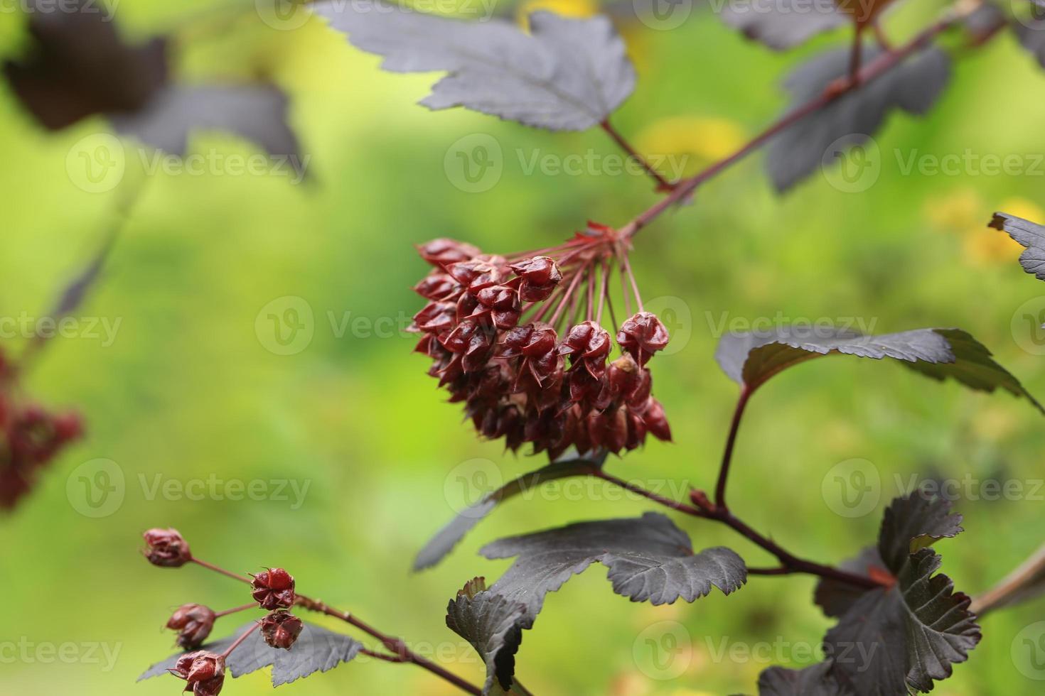 planta de rama de fondo de otoño abstracto foto