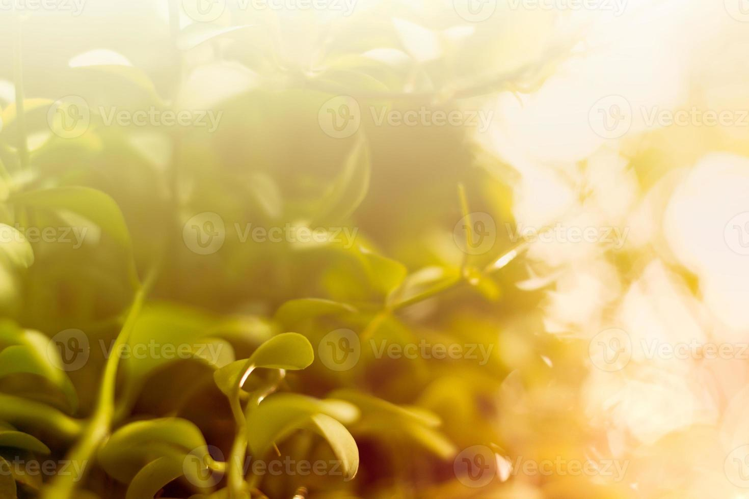 fundo colorido fresco de manhã com folhagem foto