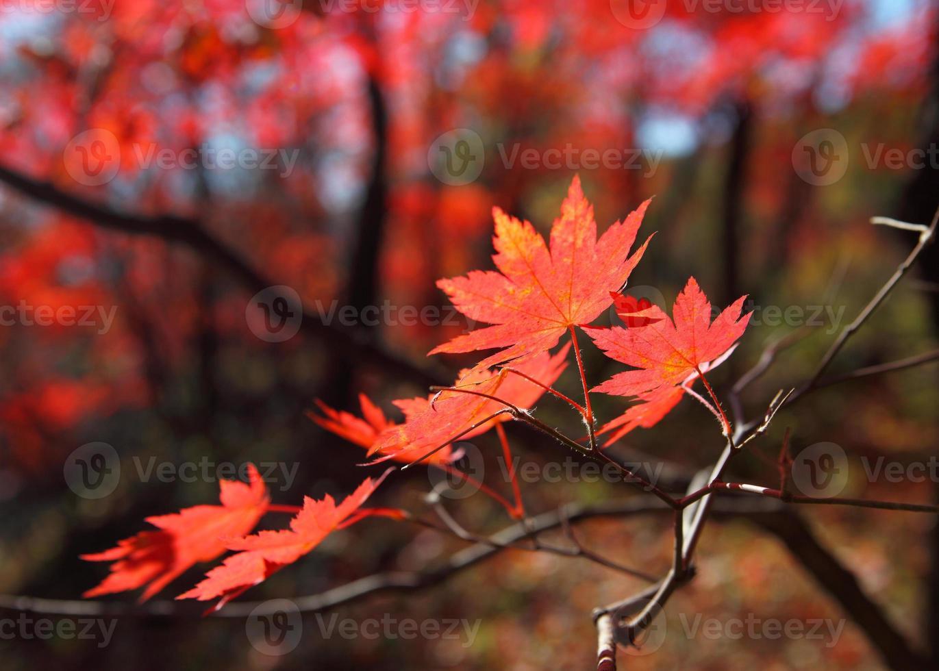 montaña de otoño con lago foto