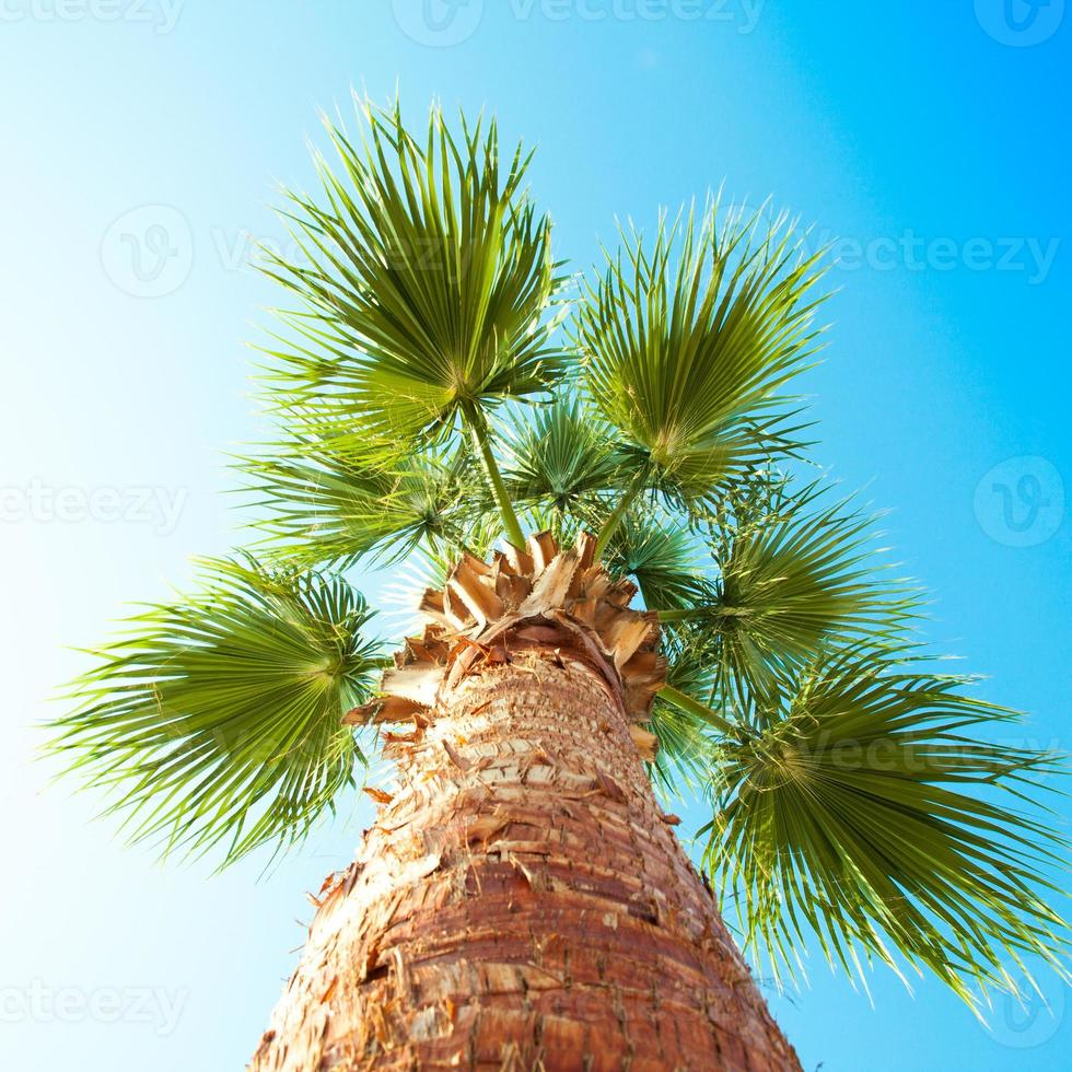 Palm tree from below photographed photo