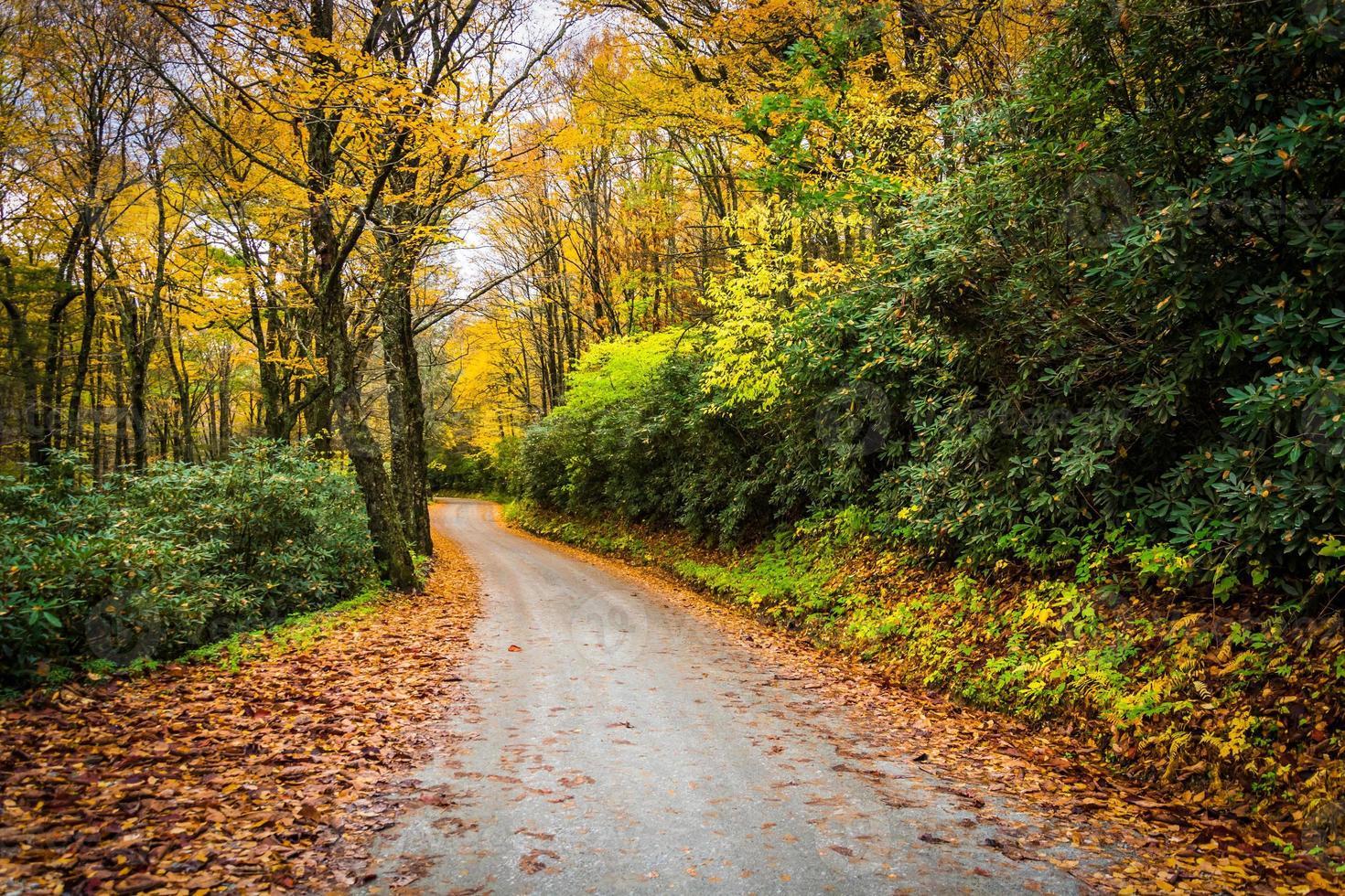 color del otoño a lo largo de un camino de tierra cerca de blue ridge parkway foto