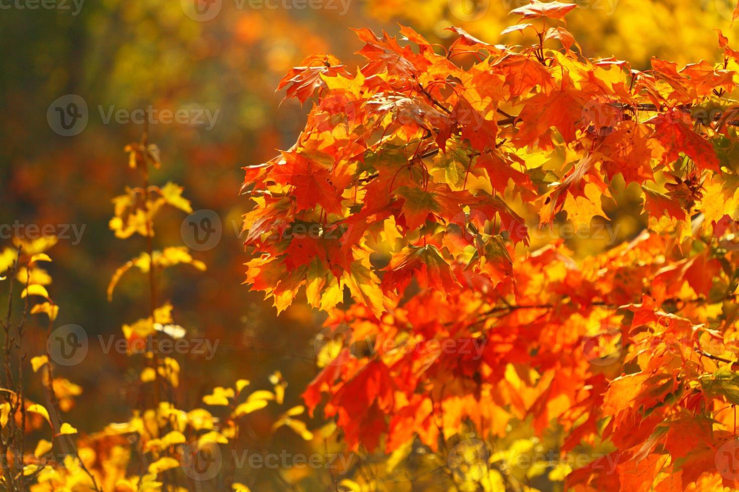 hojas de otoño brillantes en el entorno natural foto