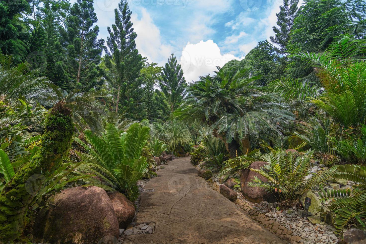 Jardín de la evolución en el jardín botánico, Singapur foto