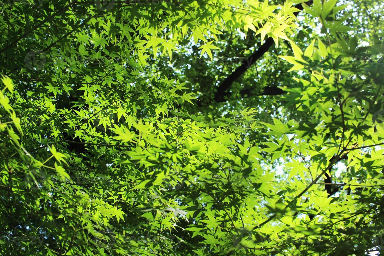 luz del sol a través del verde tierno foto